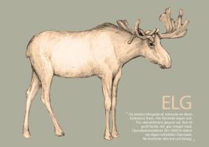 Elg_forside_A5