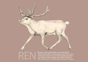 Rensdyr_forside_A5