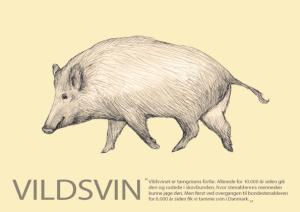 Vildsvin_forside_A5